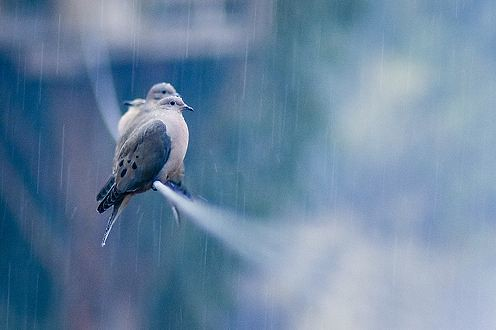 bird-Rain-Lovers