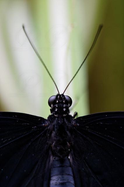 Le jardin aux papillons - Vannes