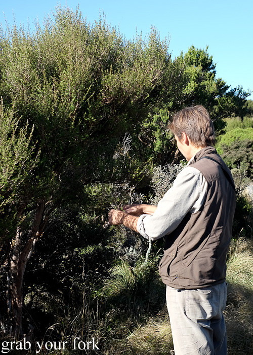 Billy picking manuka leaves during the Seal Coast Safari, Wellington