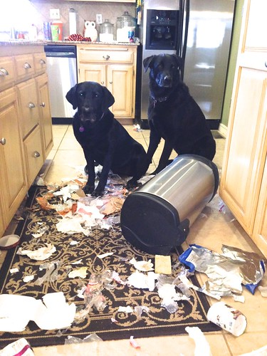 Trash Dogs