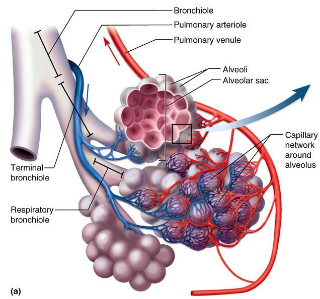 THE AMAZING HEMOGLOBIN MOLECULE 17249788435_40d76a5ca3_z