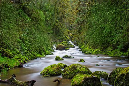 longexposure trees green water creek canon river rapids le pnw t4i kennedycreek 1riverat matthewreichel