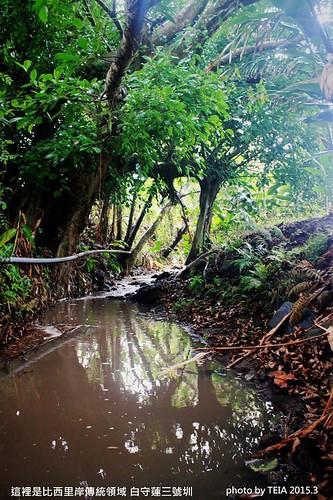 榕樹從一顆小苗,現在已長成一座城堡,跨越了水道,撐起了這裡的天與地!圖片來源:TEIA農貓學田