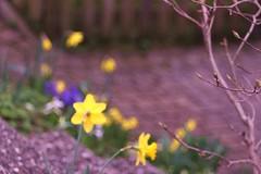 Trioplan spring