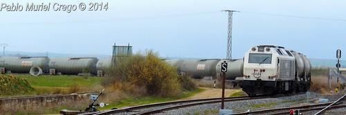 El etanol en planta