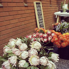 The first time I've ever seen protea #flowers was in #SouthAfrica. I think they're beautiful!