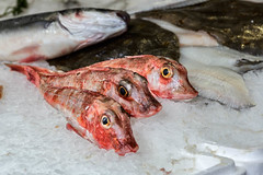 animal, fish, fish, seafood, red snapper, food,
