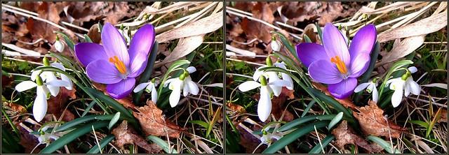 ... Springtime3 ... 3D cross-view ...