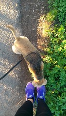 Walking Rosa