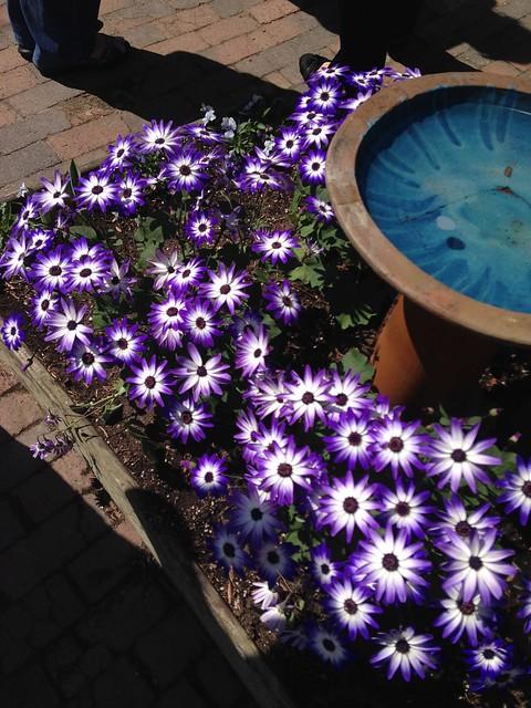 Spring at Pickity (1)