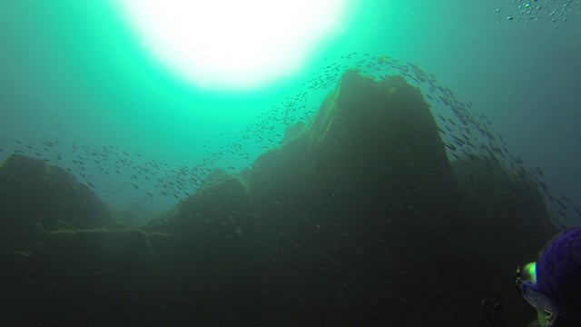 Another hypnotic sight: a swarm of fish passing by the underwater cliffs