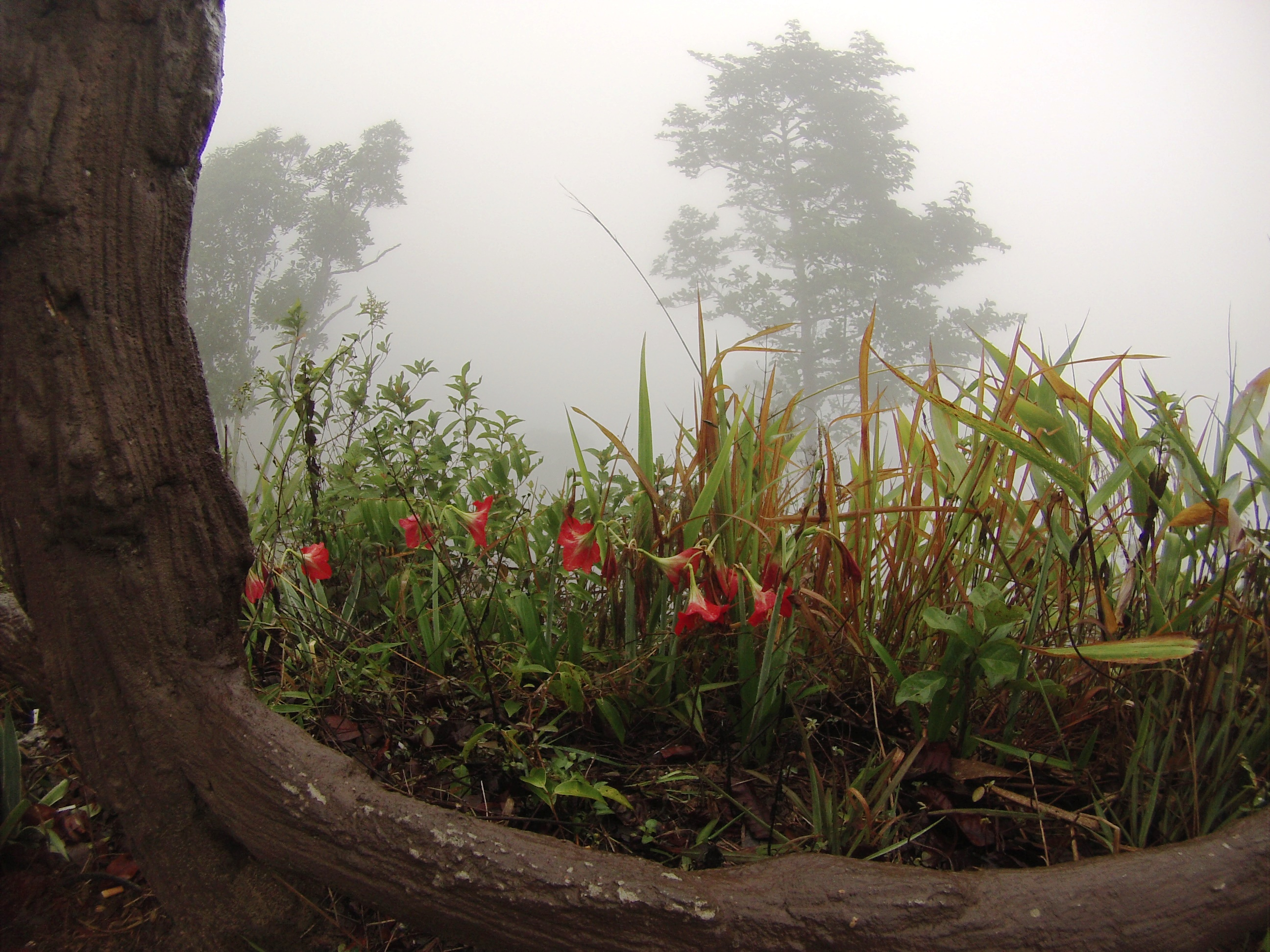 Phu Rea National Park in the Fog, March 2015