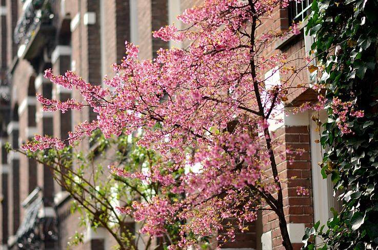 DSC_5700 flowers Amsterdam, Tamara Chloe