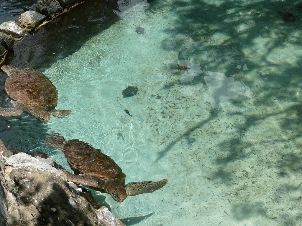 Turtles at Coral World in St. Thomas