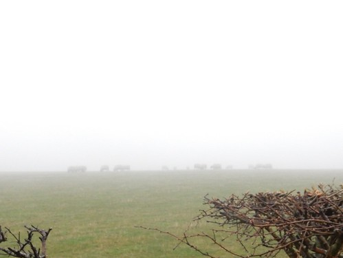Sheep on the top (note visibility)