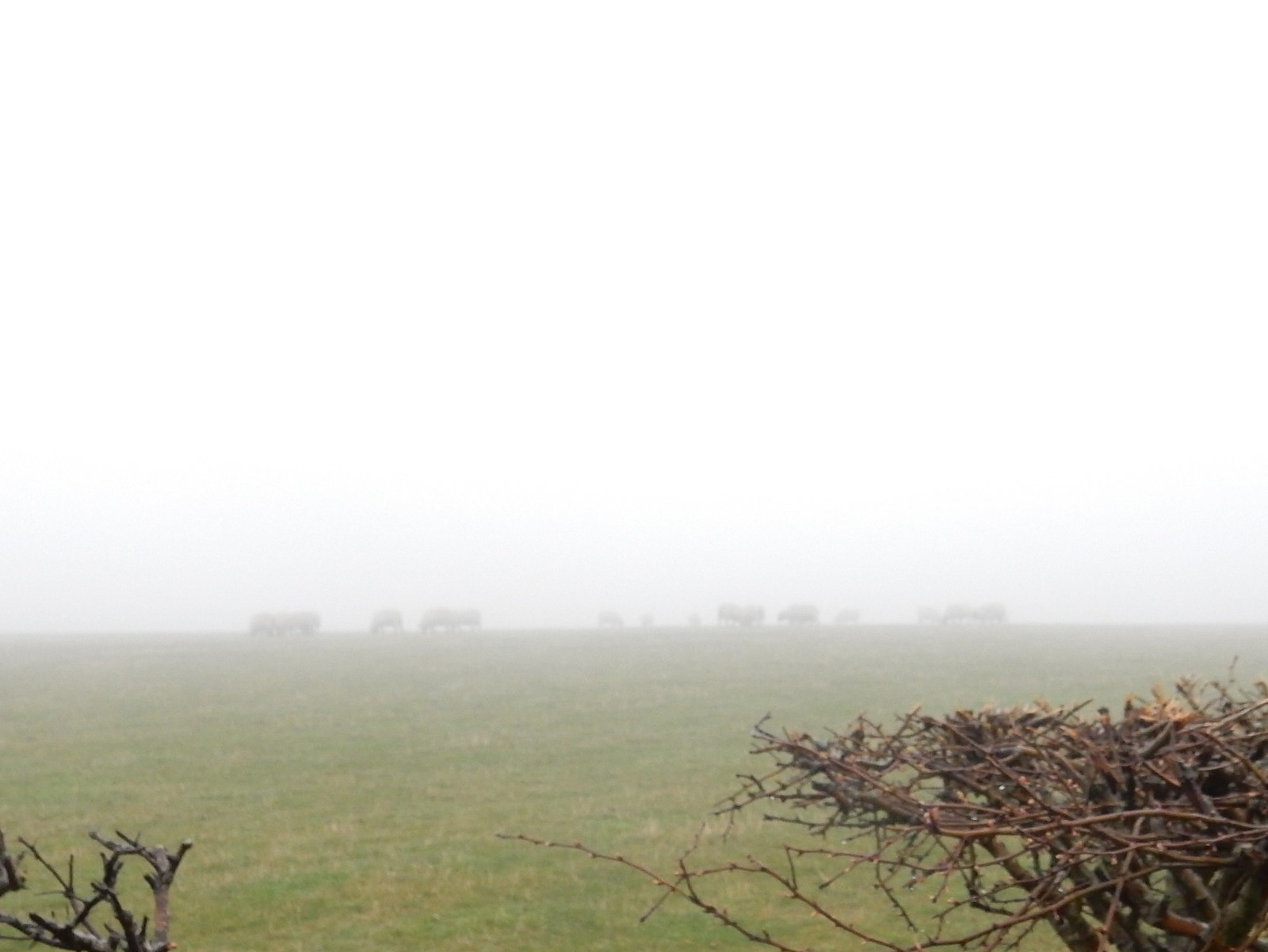 Sheep on the top (note visibility) Hassocks to Lewes