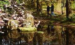 Japanese pond
