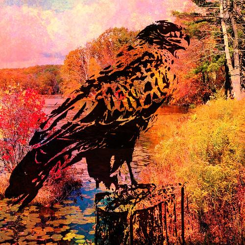 Hawk digital collage