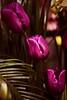 Cascading tulips