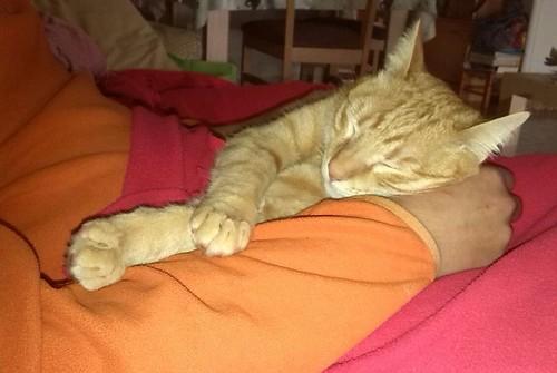 Danko, gato rubio mimosón, un caramelo nacido en Marzo´13 en adopción. Valencia. ADOPTADO. - Página 2 16385757944_600b1d74eb