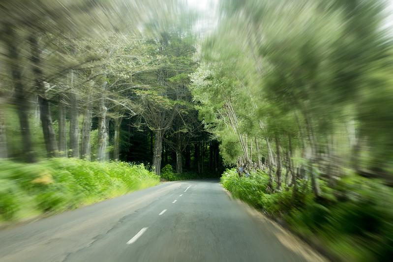 Madeira forest