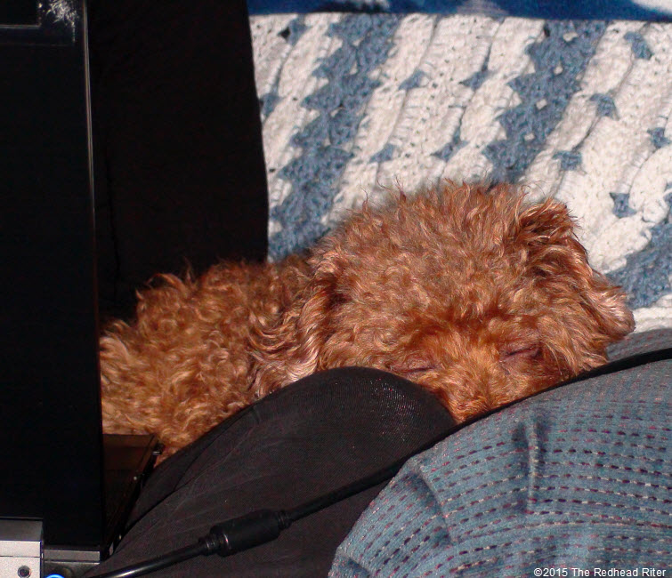 red toy poodle sleeping Top 41 Lessons Blogging Teaches About Life – Ways Blogging Has Changed Me