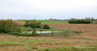 Dans les plaines de la Garonne