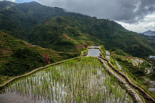 philippines natura unesco banaue riceterraces cordillera agricoltura tradizione irrigazione terrazzamenti luzonisland forestepluviali