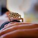 gecko by crmanski