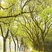 宜蘭羅東運動公園 by fmrucjo2317
