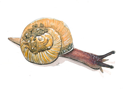 20150322_snail_web