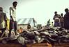 Project 365 # 084|நெய்தல்|A Fisherman Story