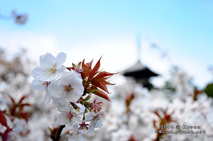 2014仁和寺01.jpg