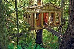 woodland, hut, wood, tree, shack, nature, house, forest, log cabin, tree house, natural environment, jungle, rural area,