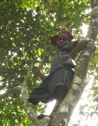 Cimbing into Lomami canopy 5