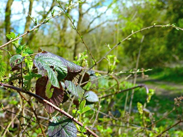Plants on a woodland walk