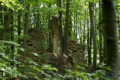 Haimburg Castle Ruin  V