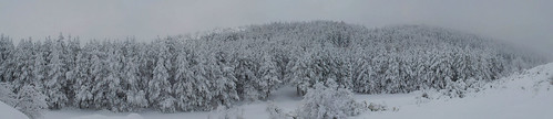 trees winter blackandwhite panorama snow tree nature monochrome landscape nikon forrest hiking panoramic macedonia photomerge vodno d5100 nikond5100
