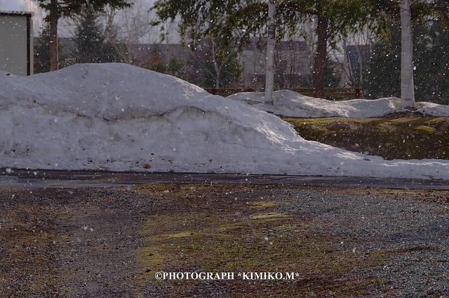 四月の雪1