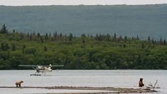 Jezioro będace lodowiskiem dla samolotów i samotny miś.