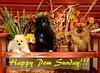 Happy Pom Sunday!