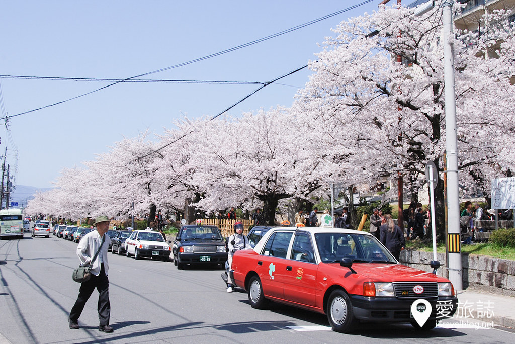 京都赏樱景点 哲学之道 39