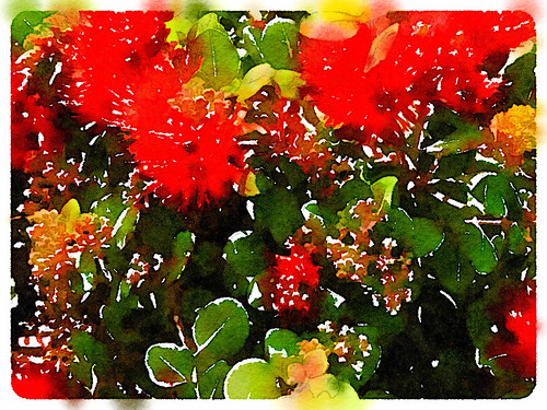Bottle Brush Plant Edited in Waterlogue Photo App Using the 'Natural' Style