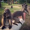 These monkeys were pretty chill