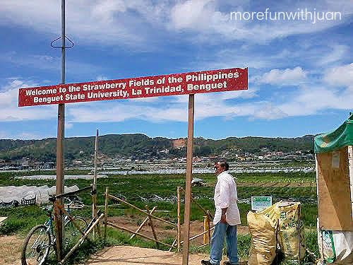 Strawberry Fields, La Trinidad, Benguet