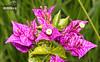 Flor 028