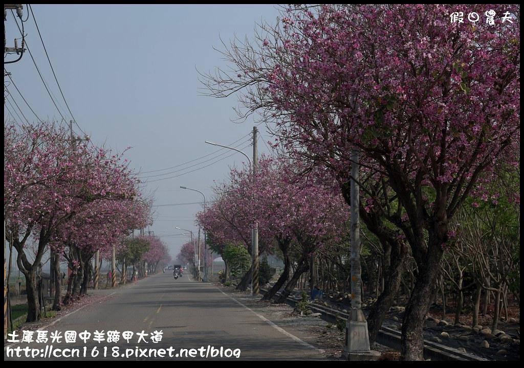 土庫馬光國中羊蹄甲大道DSC_1046