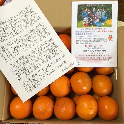 たんかん@平井オレンジグロウヴ