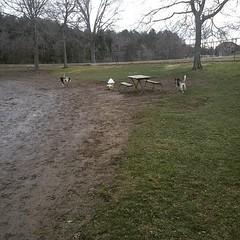 Dog park is finally open for the season! #shepsky #GSD #germanshepherddog #dogpark