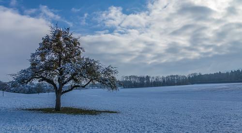 schnee snow tree nature landscape schweiz natur landschaft baum sanktgallen zuzwil züberwangen